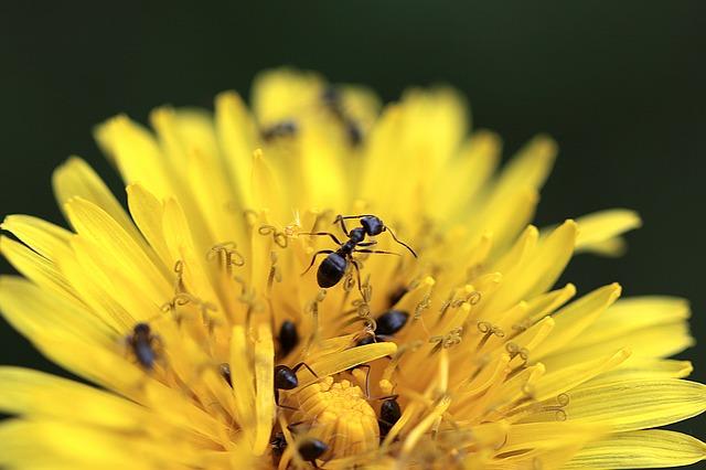 hubení mravenců Brno